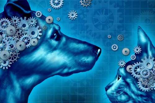 Tierhaltung/Tierpsychologie