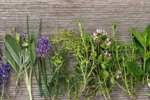 Veterinär-Heilpflanzenkunde