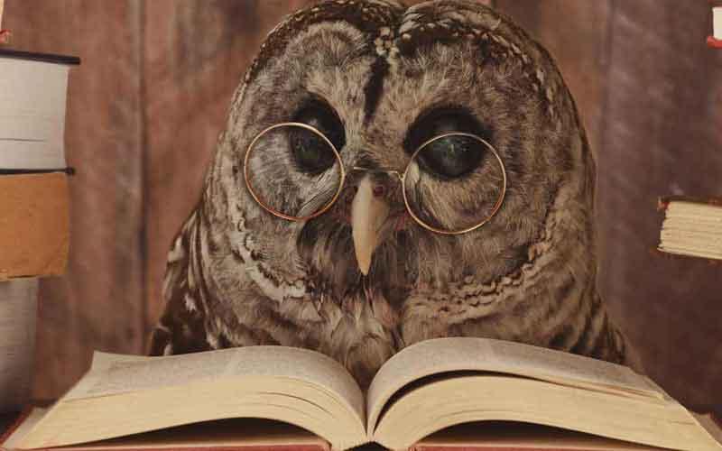 Tierheilpraktiker - Eule schaut in ein Lehrbuch