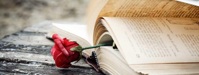 Frauen- und Liebesromane - Rose eingeklemmt in Buchseite